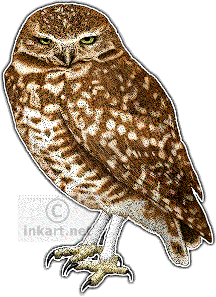banner library library Athene cunicularia line art. Drawing owl burrowing