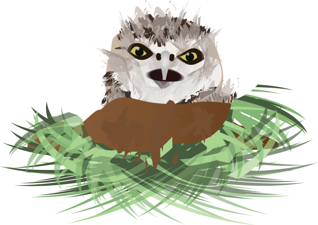 graphic download Drawing owl burrowing. Bird nest free commercial