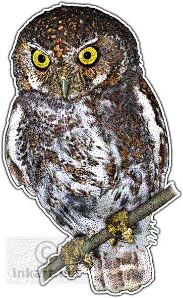 picture freeuse download Micrathene whitneyi line art. Drawing owl elf