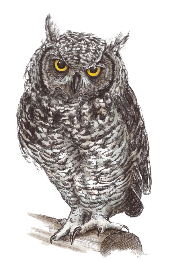 svg black and white library Great grey clipart . Drawing owl elf