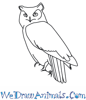 royalty free library Drawing owl great horned. How to draw a