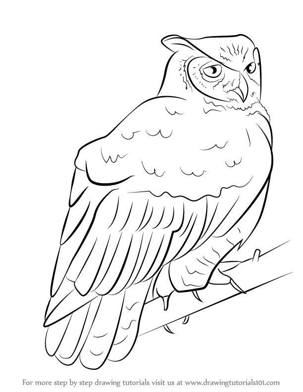clip art stock Drawing owl great horned. Learn how to draw
