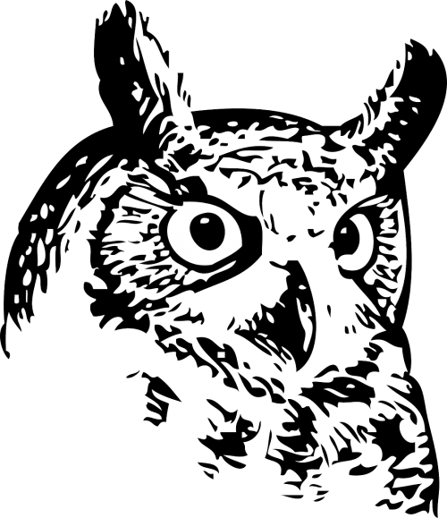 clip stock Drawing owl mystical. Feather plumage forest forests