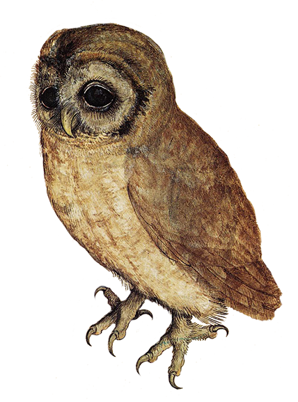 banner royalty free library Owl clip art sweet. Drawing owls realistic