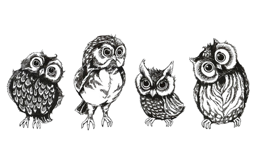 jpg library stock Art cute birds transparent. Drawing owls sketch