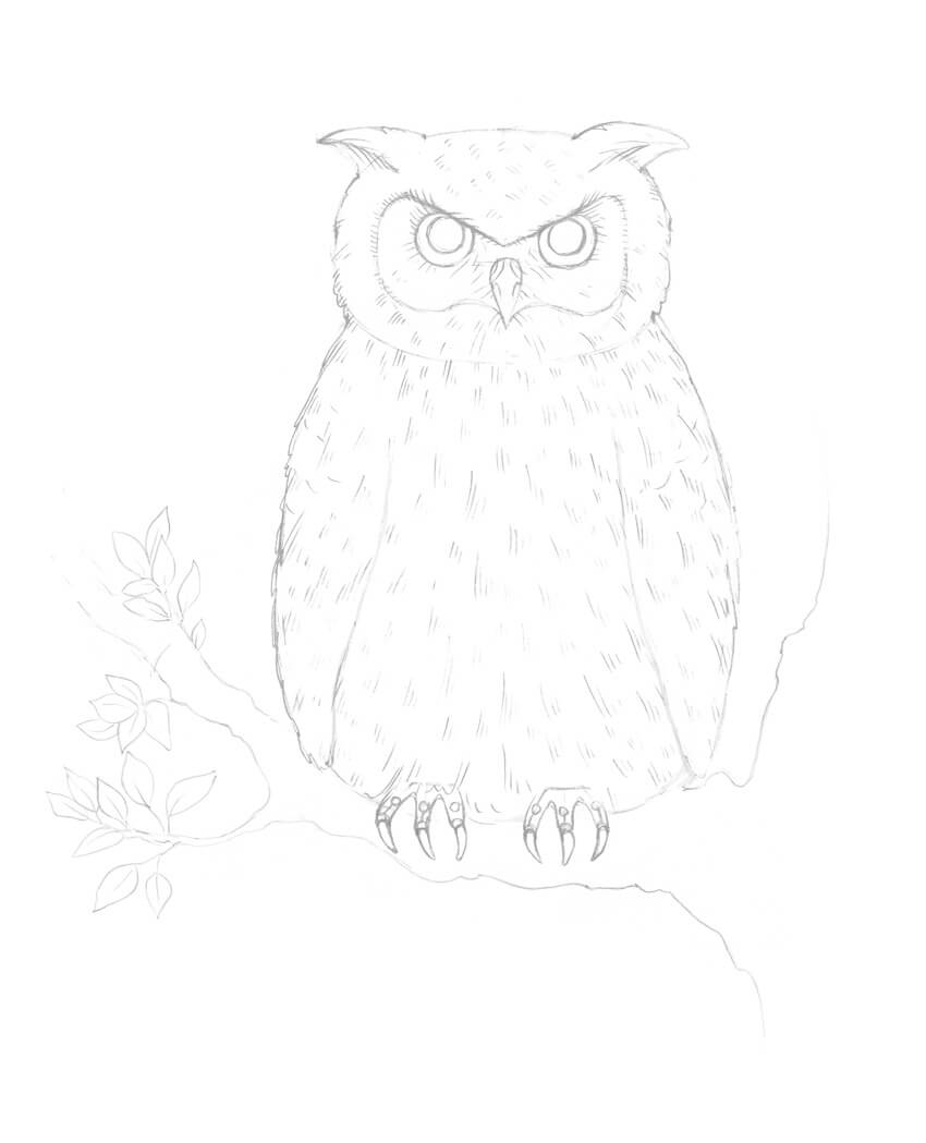svg library Drawing owl sketch. How to draw an