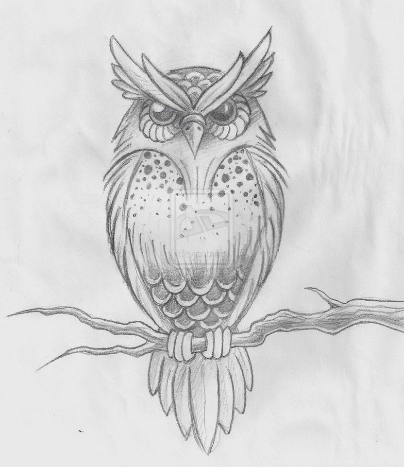 png transparent stock Drawing owls sketch. Of great horned owl
