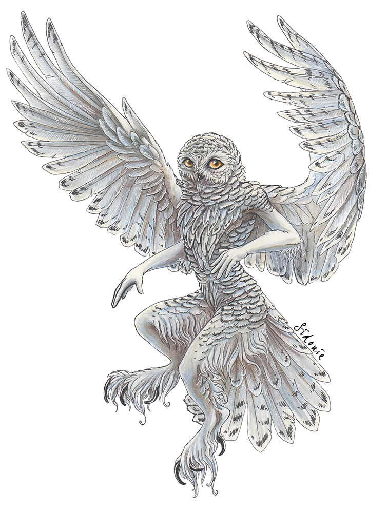 image download Drawing owl snowy. By sidonie on deviantart