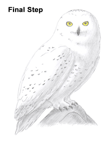 clipart black and white stock How to draw a. Drawing owl snowy