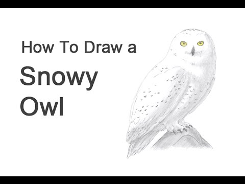 clipart black and white stock Drawing owl snowy. How to draw a