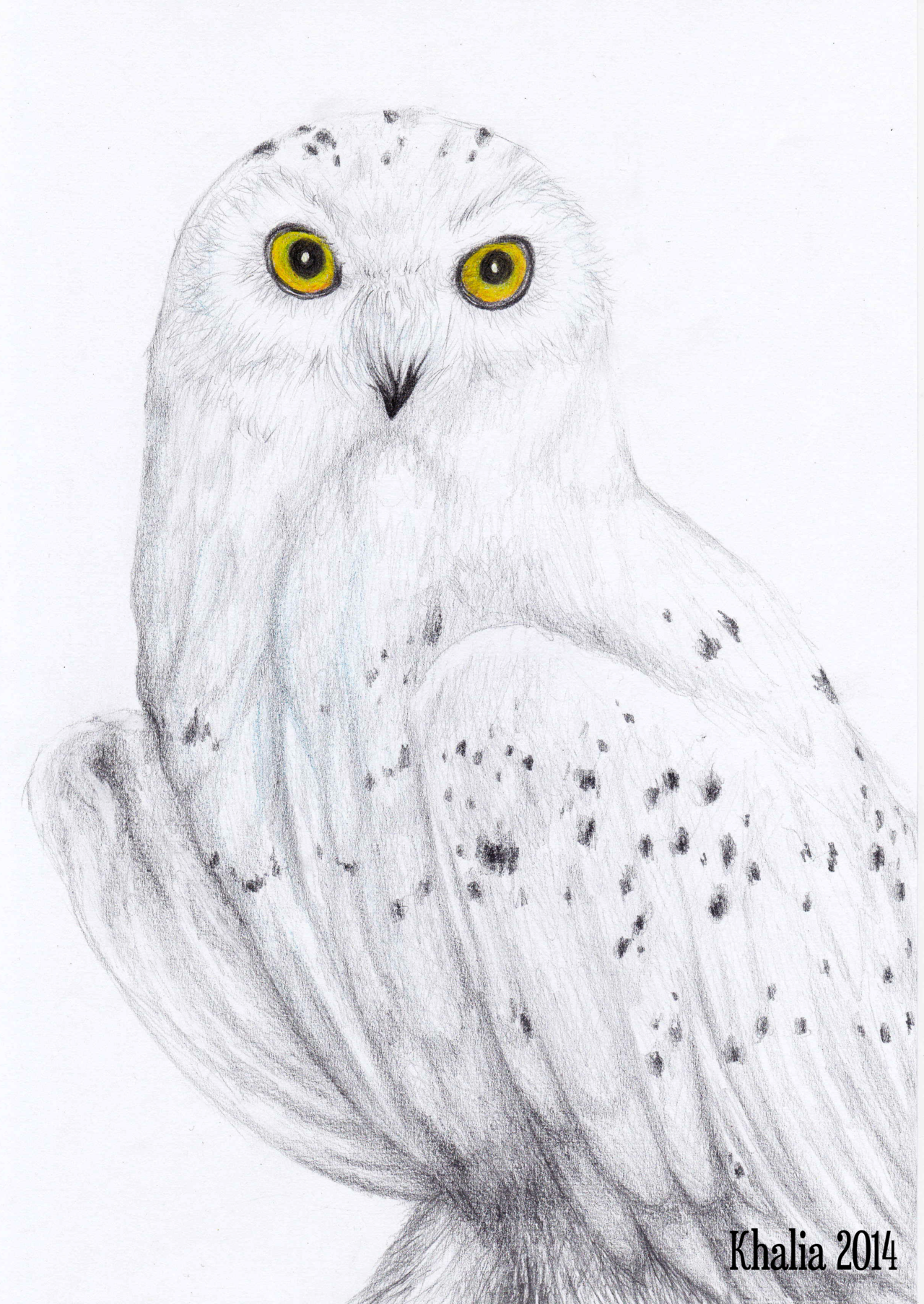 clip download Drawing owl snowy. By khaliaart deviantart com
