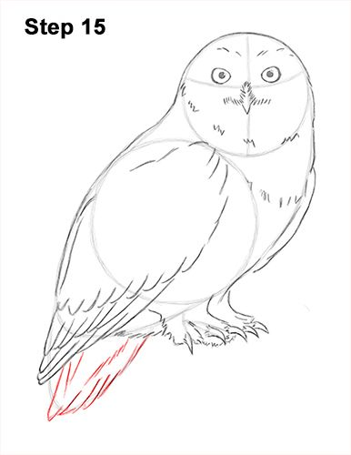 clip transparent library Art class cute . Drawing owl snowy