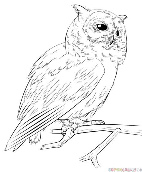 image freeuse Drawing owls beginner. How to draw a