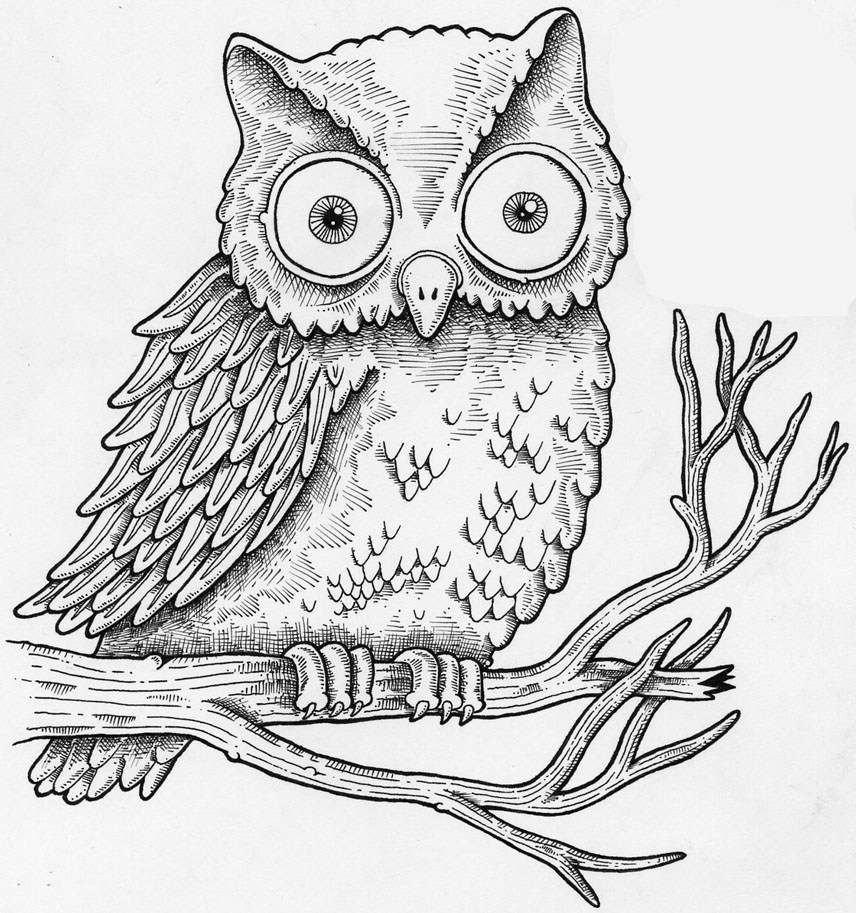clipart free stock How to draw a. Drawing owls beginner