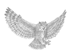 banner library library Owl in flight sketch. Drawing owls flying