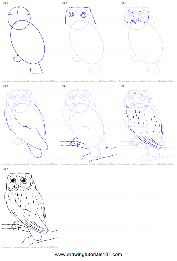 png royalty free How to draw a. Drawing owls printable