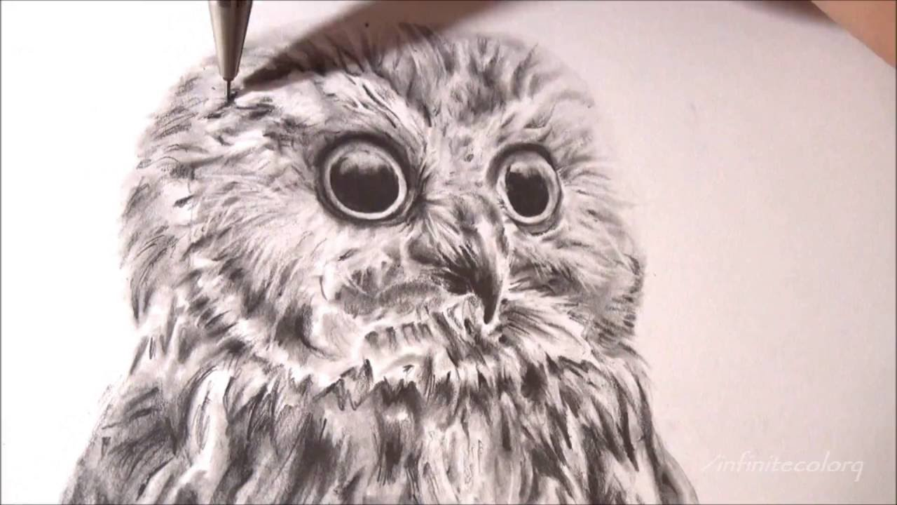 image freeuse library Owl speed time lapse. Drawing owls realistic