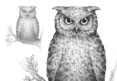 transparent download How to draw an. Drawing owls sketch