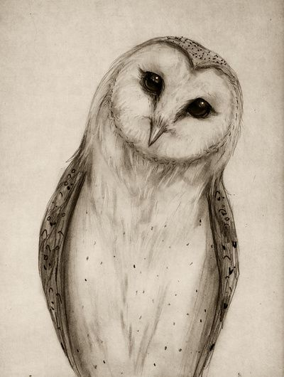 transparent download Drawing owls sketch. Barn owl art print