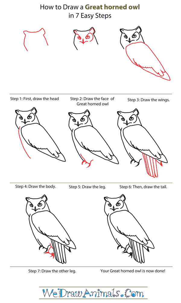 image library stock How to draw a. Drawing owls step by