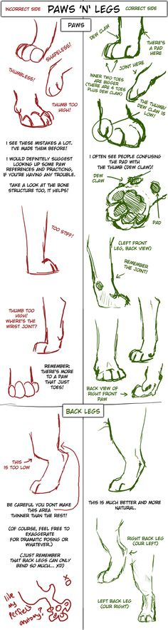 clip art royalty free library drawing paws rear #134785830