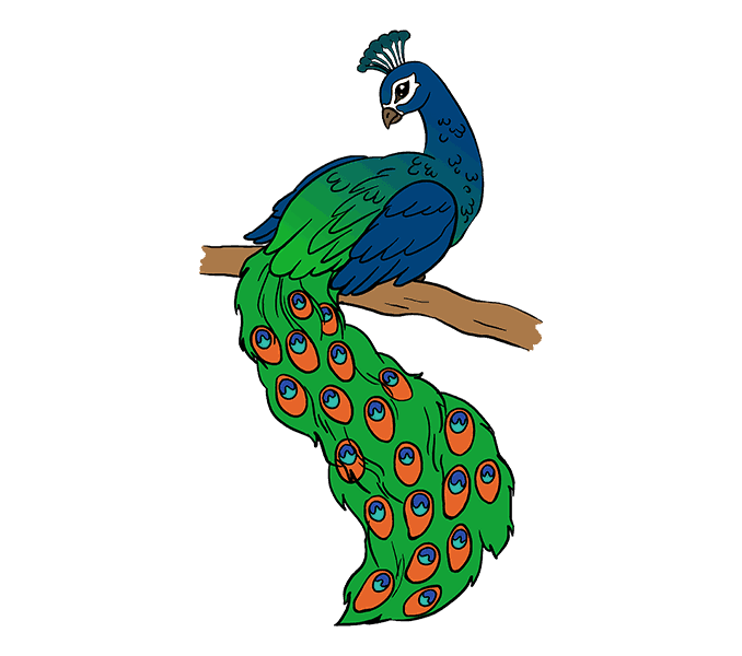 image royalty free How to Draw a Peacock in a Few Easy Steps