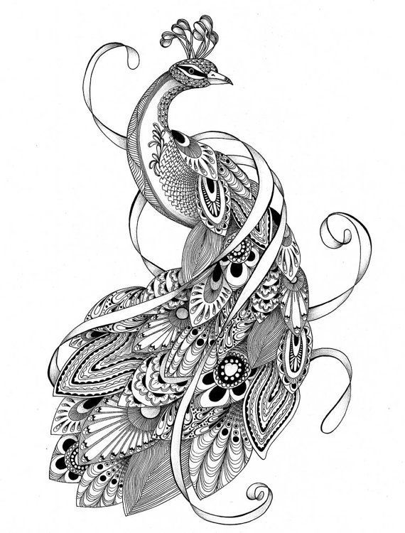 clip art transparent download Peacock feathers coloring pages. Drawing peacocks abstract