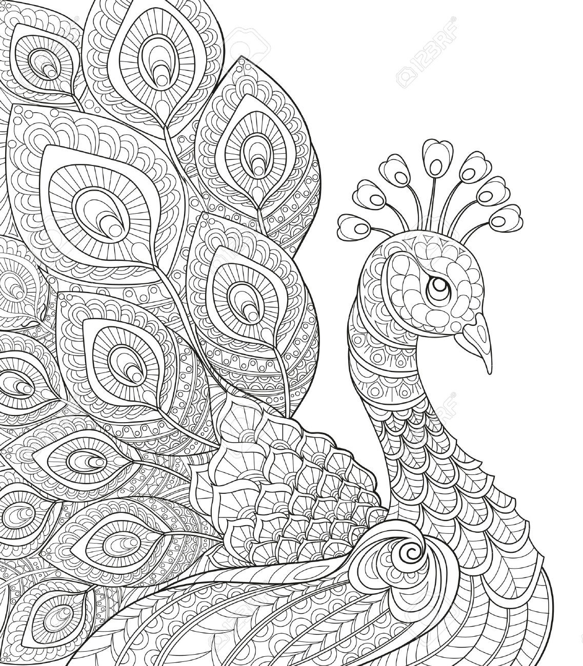 free Peacock at paintingvalley com. Drawing peacocks black and white