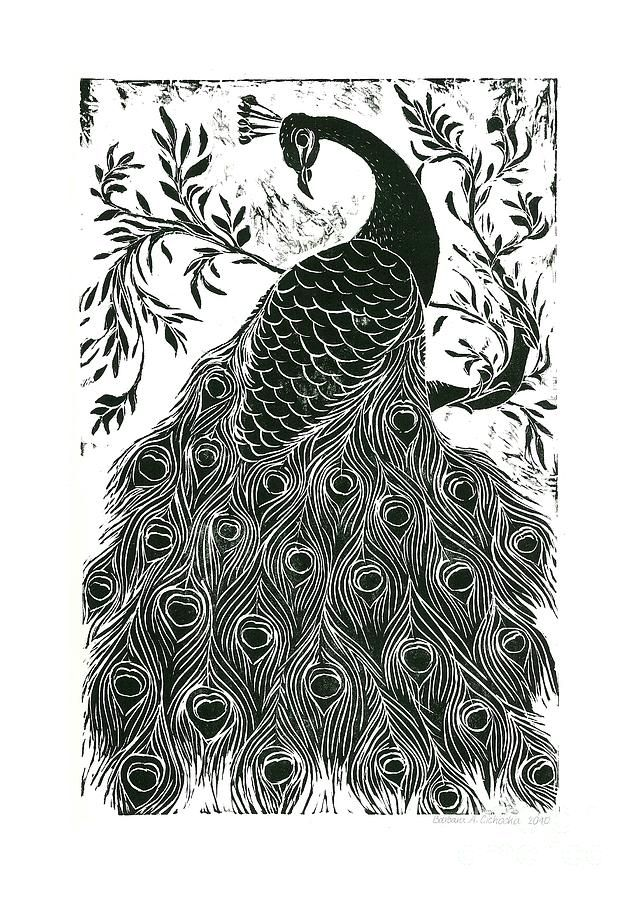 jpg royalty free download Pin on . Drawing peacocks black and white