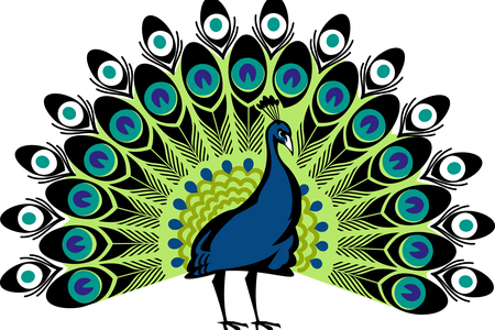 vector free library Peacock images free download. Drawing peacocks color