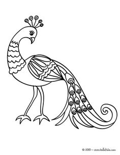 picture royalty free Drawing peacocks line.  best peacock drawings