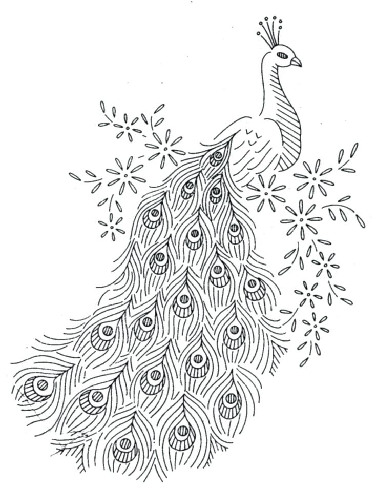freeuse stock Drawing peacocks outline. Peacock at paintingvalley com
