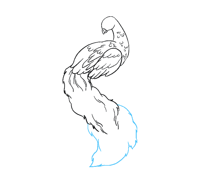 image royalty free library Collection of free peacock. Drawing peacocks outline