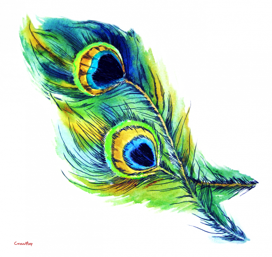jpg library download S crossmap . Drawing peacocks peacock feather