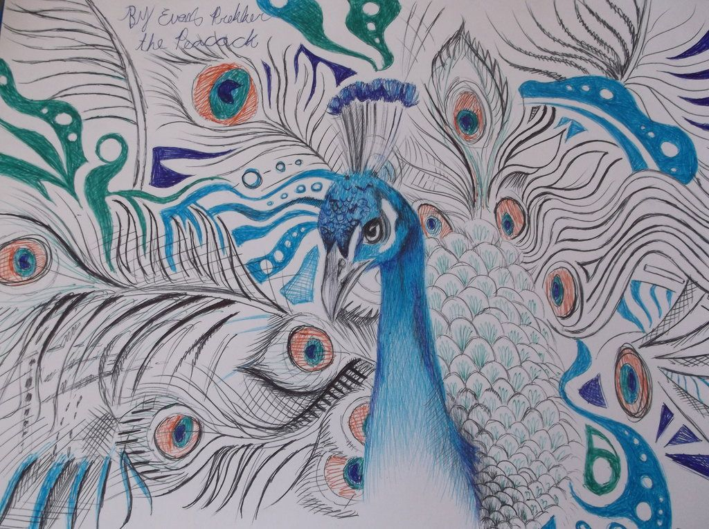 png royalty free download Drawing peacocks pen. Peacock drawings the wip
