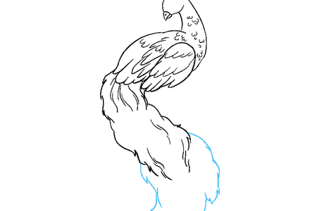 clipart free library Images of peacock full. Drawing peacocks pencil