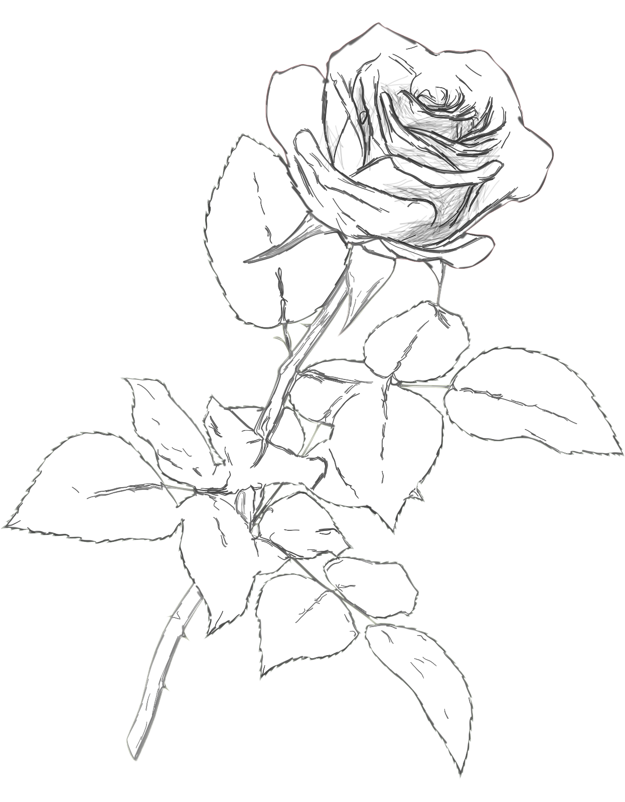 vector black and white download Classic Rose Charcoal Drawing Pencil Color Png Clipart Picture