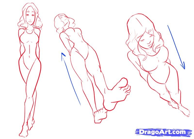 clip transparent library Drawing perspectives human. Pin on bodybasestodraw
