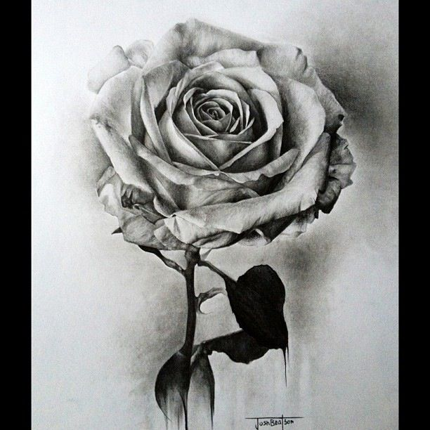 clip royalty free library Drawing photography rose.  beautiful drawings and