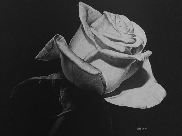 graphic black and white download White . Drawing photography rose