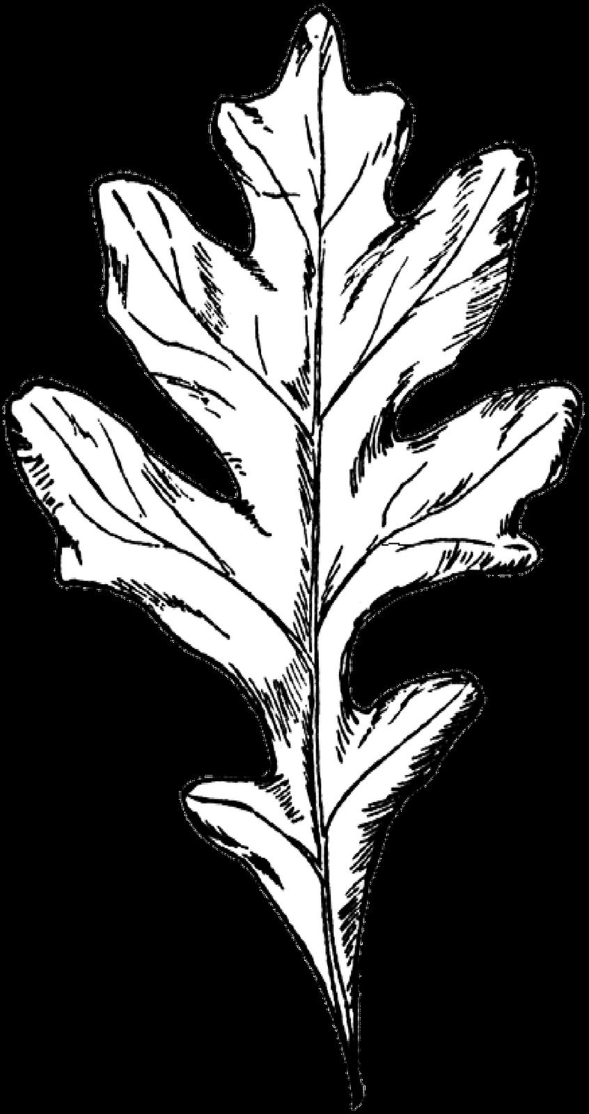 svg free download foliage drawing digital painting #112929536