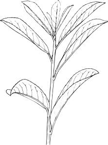 banner library library Plant Shrub Outline Clip Art at Clker