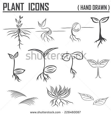 jpg library stock Google search paddle ideas. Sprout drawing plant
