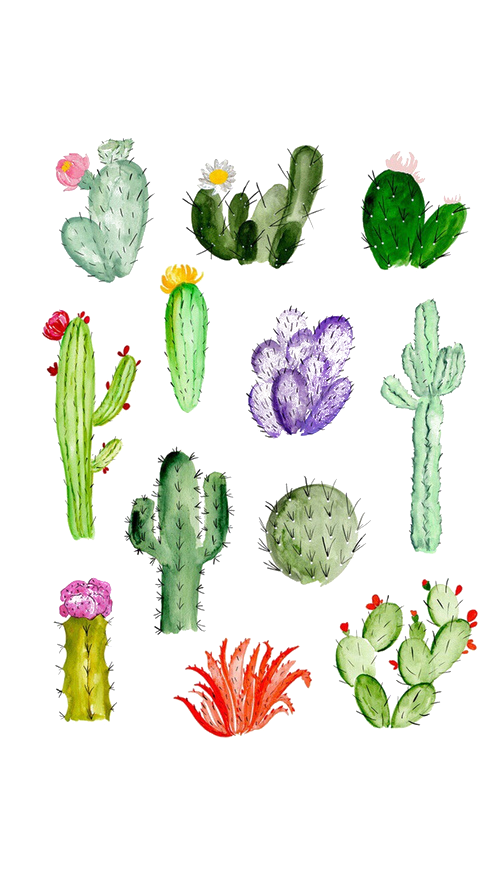 jpg free Cactaceae Drawing Watercolor painting Succulent plant