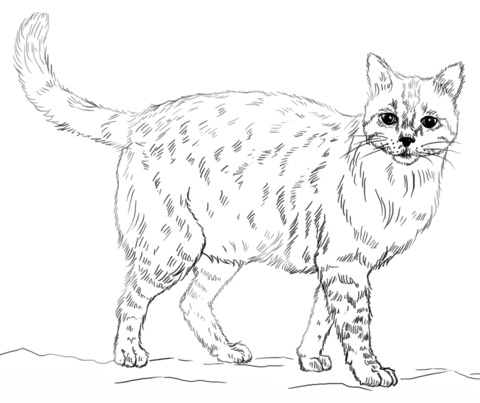 banner library Cat coloring page free. Drawing printables realistic