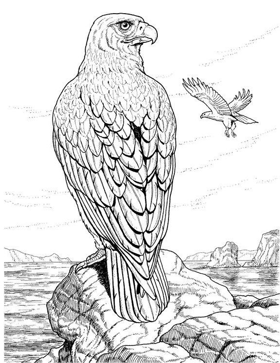 graphic freeuse download Drawing printables realistic. Detailed coloring pages for