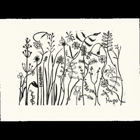 svg transparent library Drawing prints ink. Florabunda guinness