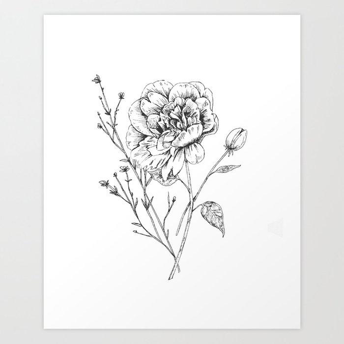 svg transparent Drawing prints ink. Peony art print by