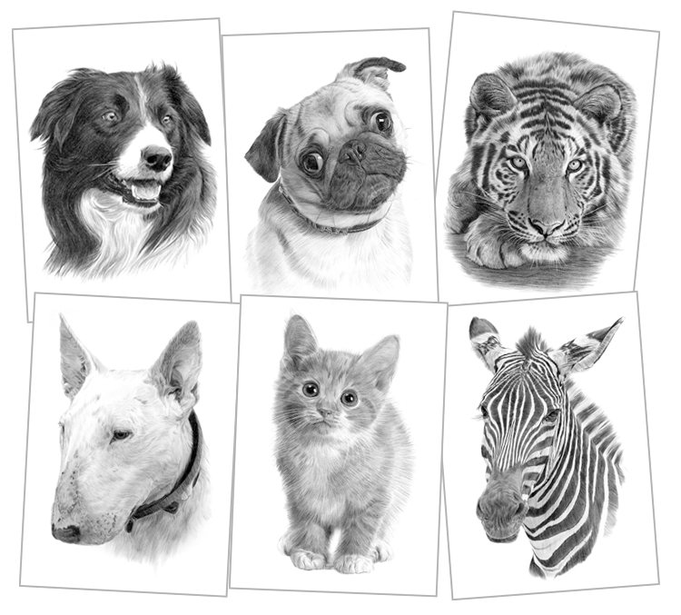 clipart Pet portraits pencil drawings. Drawing prints