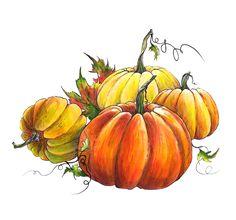 clip art transparent drawing pumpkins pumpkin fall #134808902